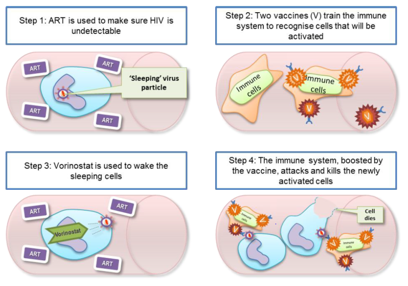 A four step diagram outlining the four steps included in the RIVER study - Step 1, ART is used to make sure HIV is undetectable. Step 2, two vaccines train the immune system to recognise cells which will be activated. Step 3, Vorinostat is used to wake the sleeping cells. Step 4, the immune system boosted by the vaccine attacks and kills the newly activated cells